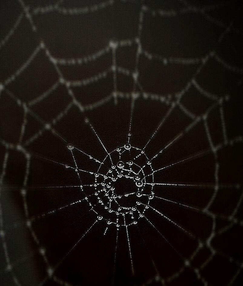 dark.. spider's touch..