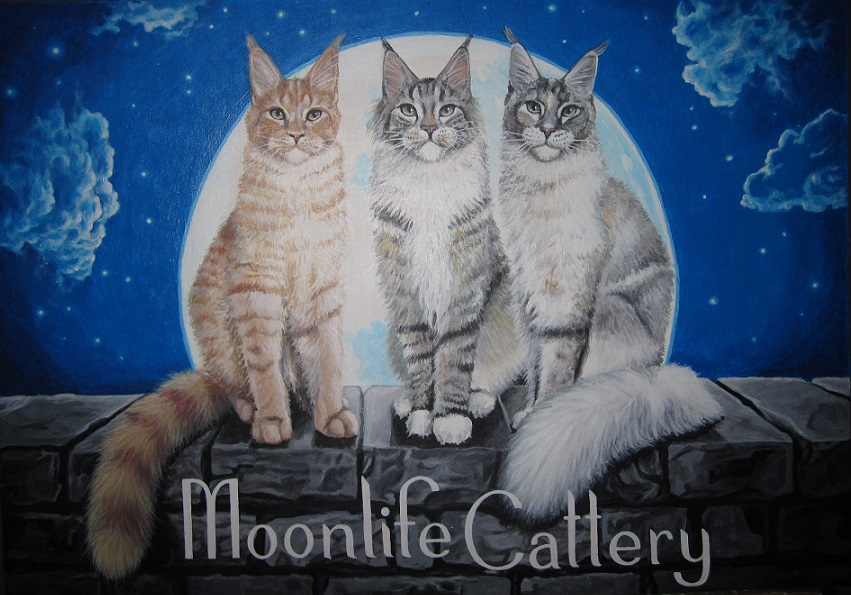 Moonlife Cattery